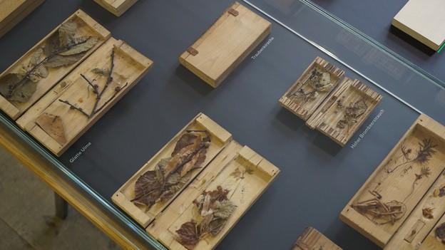 Foto von den Exponaten der Ausstellung. Die Holzbücher liegen hinter Glas. Die Exponate sind einzeln beschriftet.