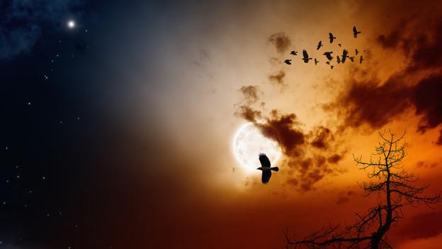 Vögel fliegen vorbei am vollen Mond, der die Nacht in ein helles Licht taucht.