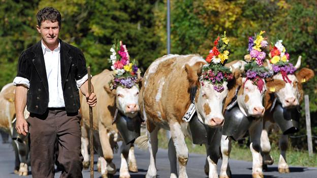 Ein Bauer geht mit seinen Kühen auf einer geteerten Strasse Richtung Alp.