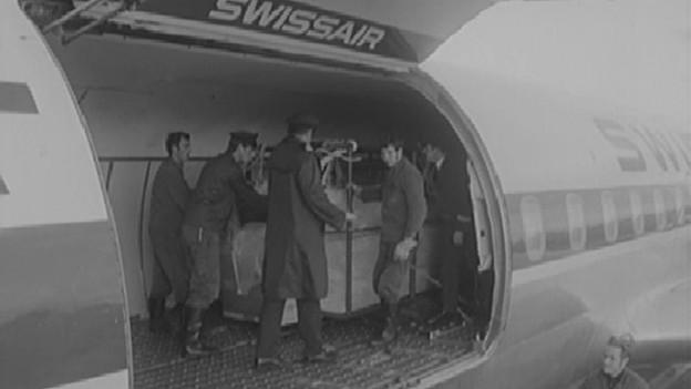 Killerwal «Clovis» wird am Flughafen Zürich umgeladen.