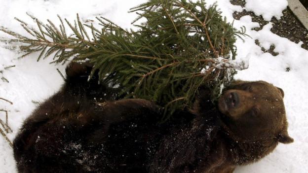 Vor 40 Jahren griff ein Bär im Berner Bärengraben einen Wärter an.