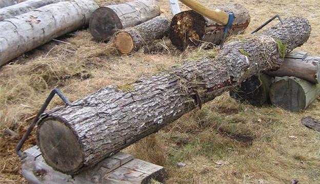 Ein abgesägter Baumstamm liegt auf zwei Holzböcken.
