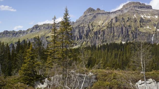 Boedmerenwald im Muotathal.