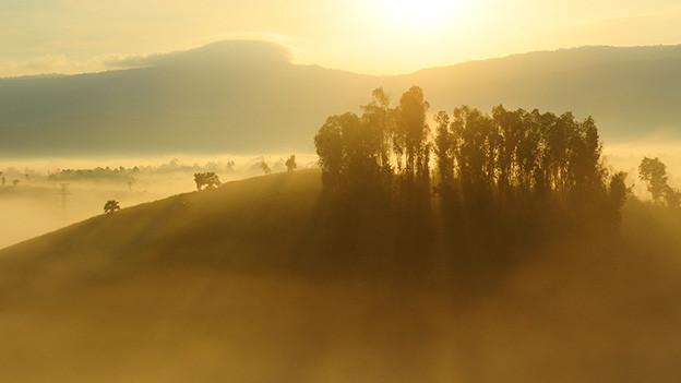 Herbstliche Stimmung mit Sonnenstrahlen, die durch den Nebel dringen.