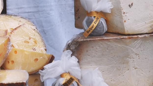 Mehrere Käse für Foto arrangiert.