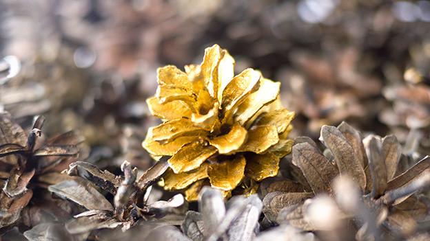 Ein gold bemalter Tannenzapfen.