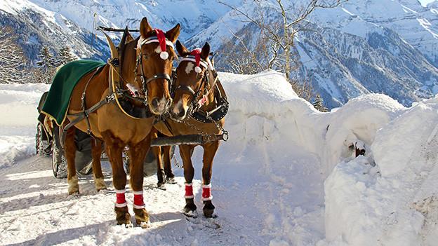 Zwei gesäumte Pferde in einer winterlichen Landschaft.