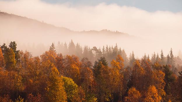 Nebelschwaden über einem bunten Herbstwald.