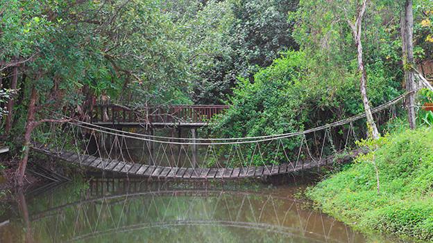 Eine Hängebrücke aus Holz führt über einen Bach.