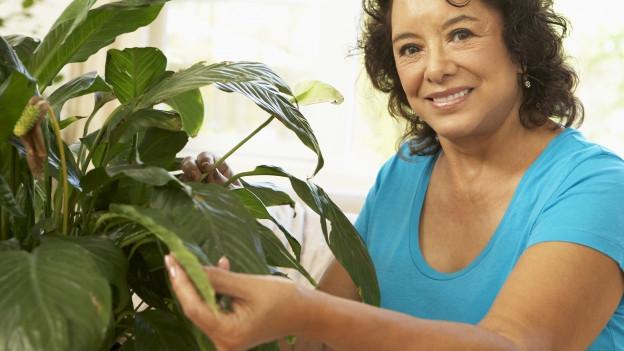 Frau pflegt Zimmerpflanze.