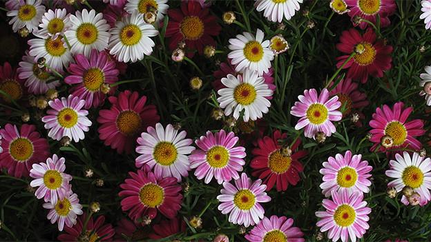 Viele verschieden farbige feine Blüten.