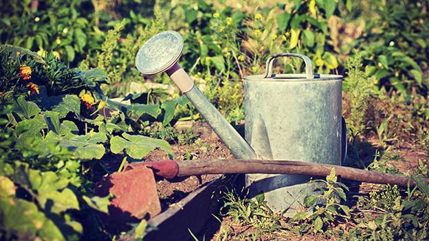 Eine Giesskanne vor einem Gartenbeet.