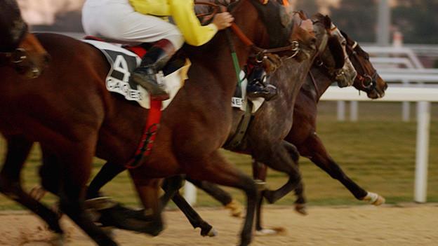 Schnappschuss mit vielen Pferdebeinen im rasanten Tempo.