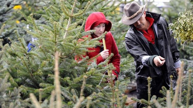 1947 lieferte die Stadt Zürich Weihnachtsbäume bis in den Kanton Uri.