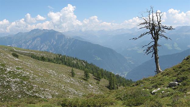 Landschaftsbild mit Bergpanorama und einem dünnen Baum im Vordergrund.