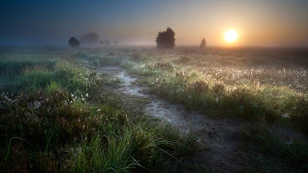 Sonnenaufgang über einer nebligen Moorlandschaft.