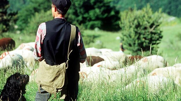 Ein Hirte, ein Hund und viele Schafe auf einer Weide.