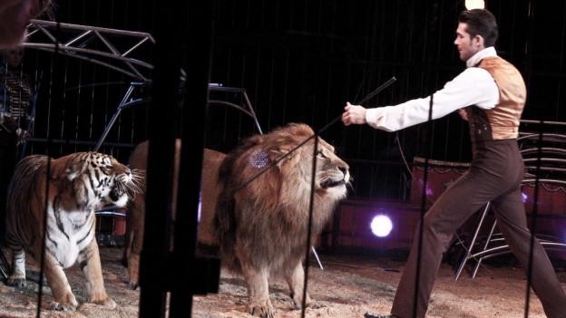 Dompteur mit Löwe und Tieger in Arena.