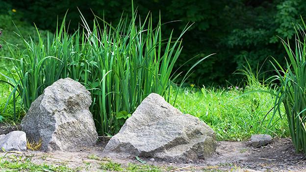 Zwei grosse Steine am Rand einer grünen Wiese.