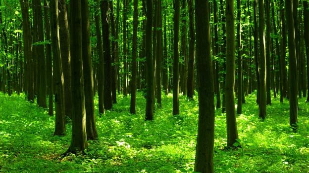 Dichter Wald mit von Gebüsch bewachsenem Boden.
