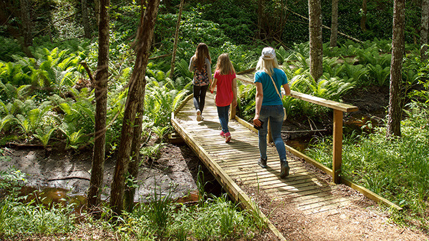 Eine junge Frau und zwei Mädchen spazieren im Wald über einen Holzsteg.