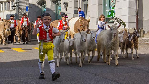 Kinder und Männer in Appenzeller Trachten treiben Ziege und Kühe durch ein Dorf.