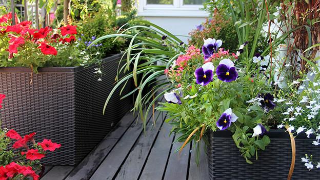 Blumen und Pflanzen auf einen Balkon.