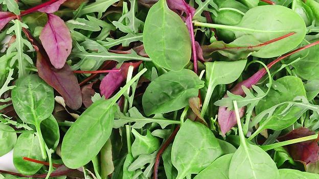 Frische rote und und grüne Salatblätter.