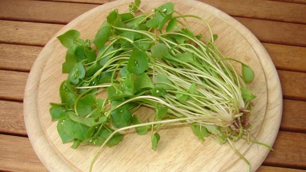 Zarte Pflanze mit grünen Blättern.