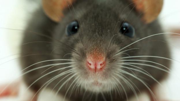 Herzig. 1982 gab es im Zürcher Oberland aber eine richtige Mäuseplage.