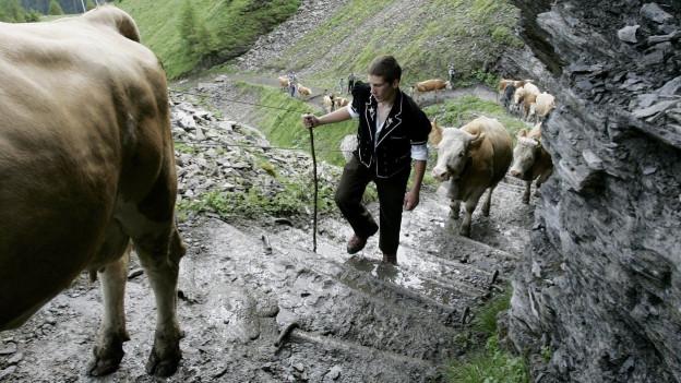 Sennen treiben ihre Kühe von Adelboden auf die Engstligenalp (Foto von 2007)