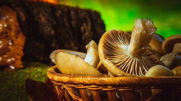 Ein Korb voller Pilze auf einem Waldboden.