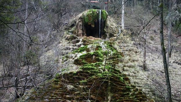 Eingang zu einer Waldhöhle, die an einen offenen Schlund erinnert.