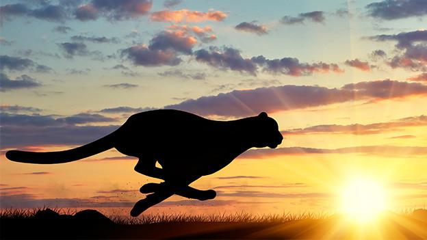 Silhouette eines Gepards bei Sonnenuntergang.
