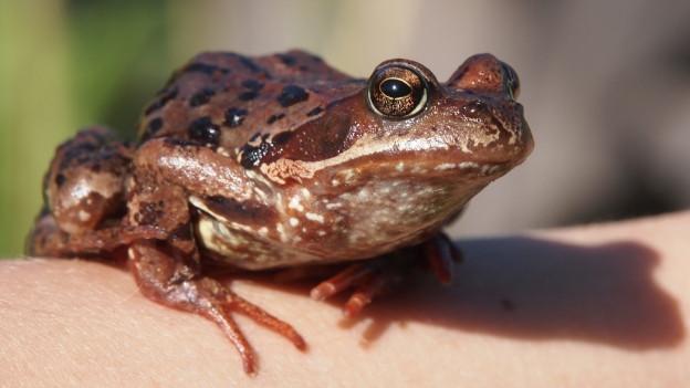 Ein Frosch aud einer Hand.