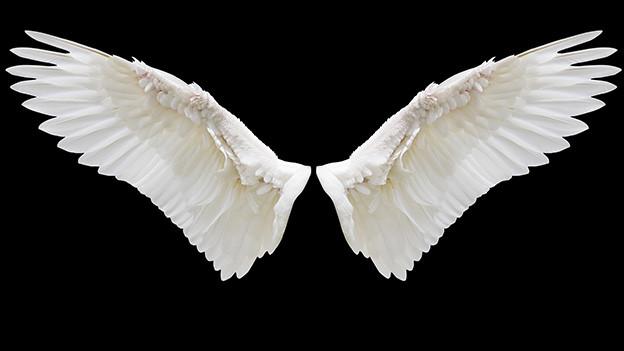 Weisse Flügel auf schwarzem Grund.