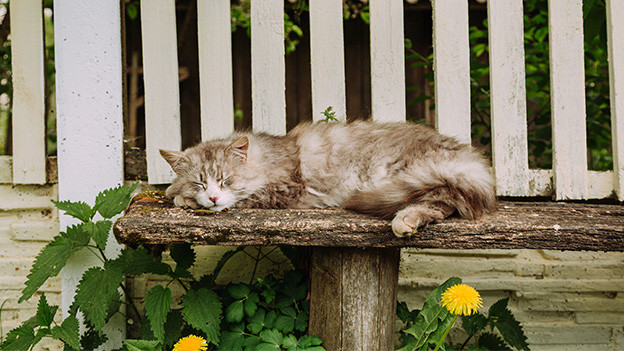 Eine schlafende Katze auf einer Holzbank.