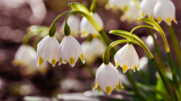 Kleine, weisse Blumen mit weissen Kelchen.