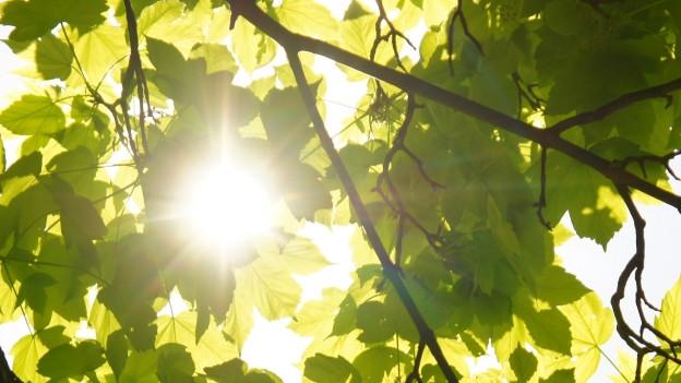 Die Sonne scheint durch die Blätter.