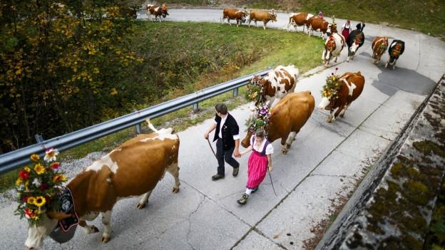 Alpabzug mit geschmückten Kühen.