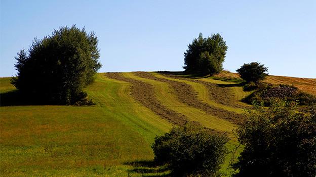 Ein Hügel mit Bäumen und Sträuchern.