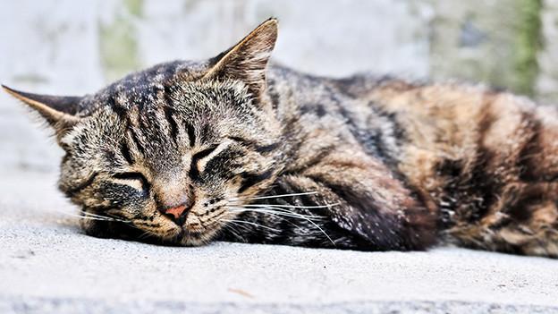 Eine zufriedene schlafende Katze.