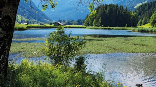 Blick über Flusslandschaft.