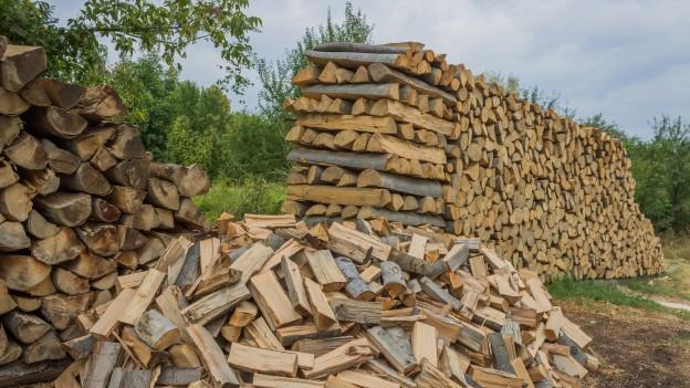 Holzbeige mit viel Holz am Waldrand.