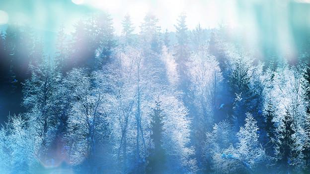 Bäume in einer verschneiten Landschaft.