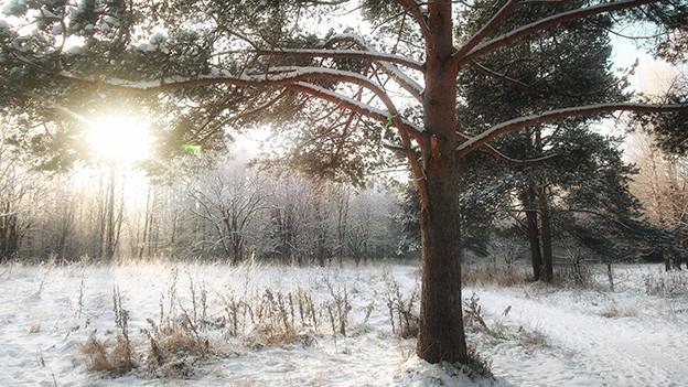Waldlichtung im Winter.