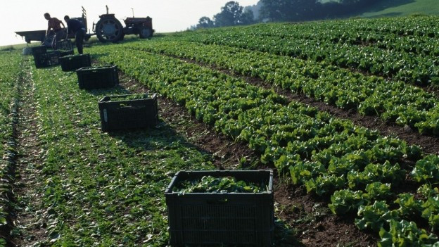 Arbeiter arbeiten auf dem Feld.
