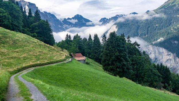 Ein Weg führt durch die Bergwelt.