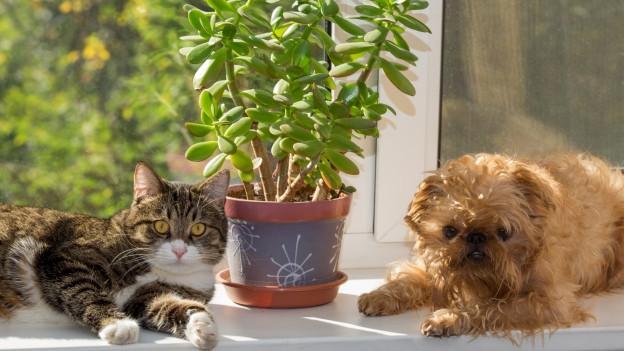 Eine Katze und ein Hund liegen auf dem Fensterbrett.