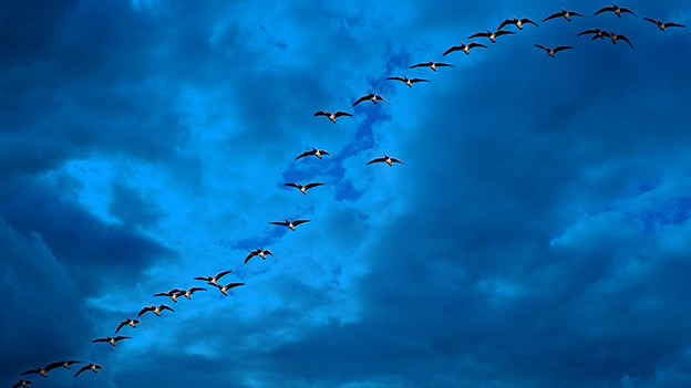 Vogel-Formation am blauen Himmel.
